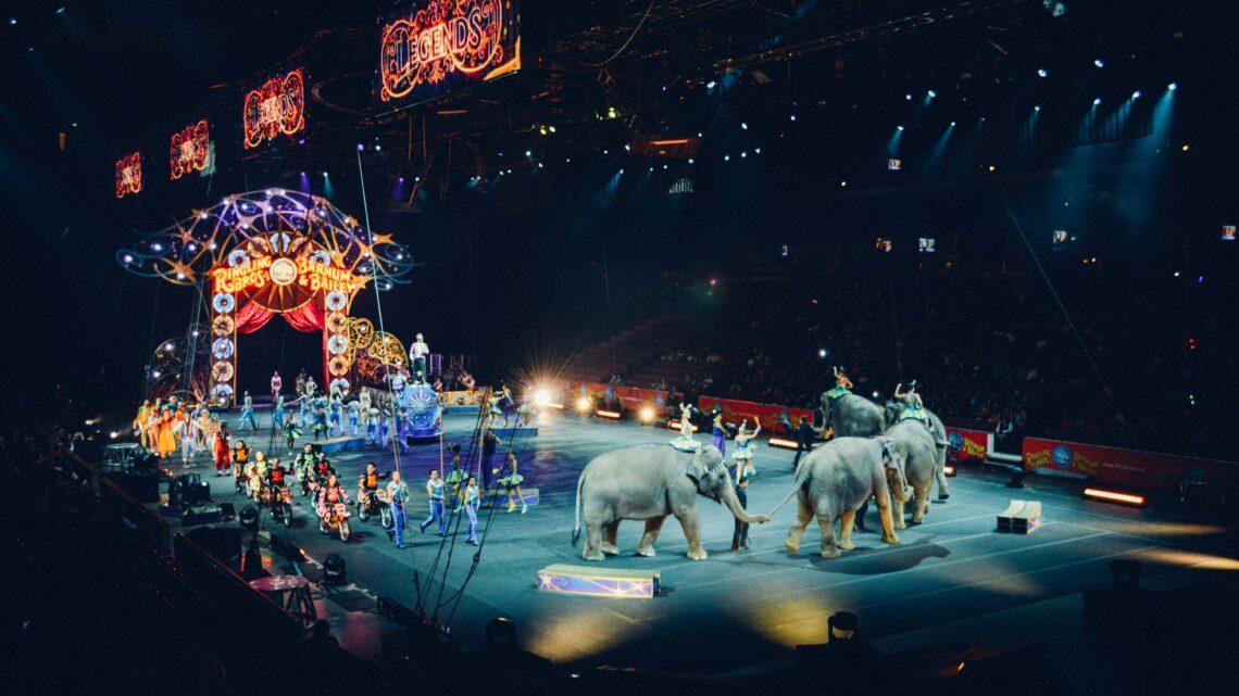 Micro-Trottoir: Les animaux dans les cirques